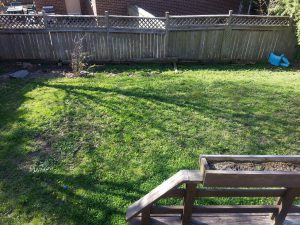 Lawn Care Before Overseeding