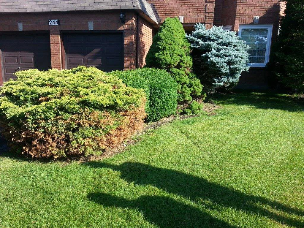 Flower Bed Edging Services
