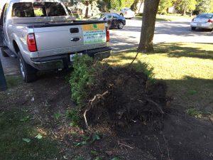 tree-removal-gta