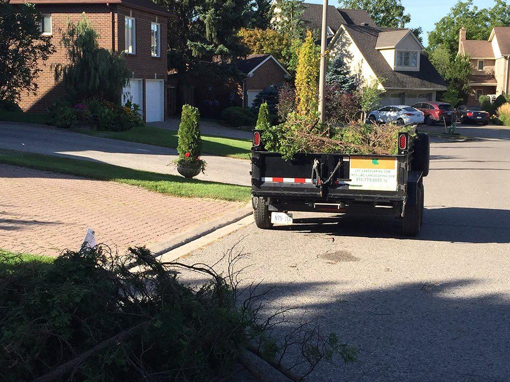 tree-removal-markham