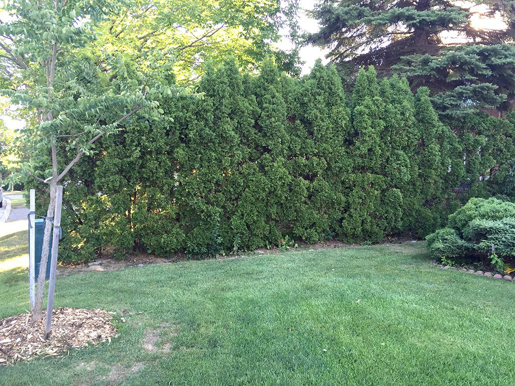 tree-removal-thornhill