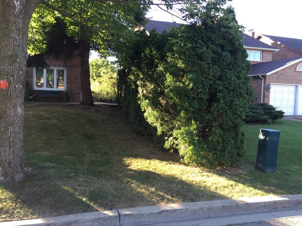 tree-removal-vaughan