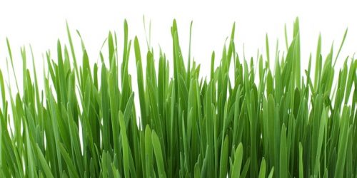 Spring Lawn Care and Maintenance – Keep Your Lawn Fresh and Green