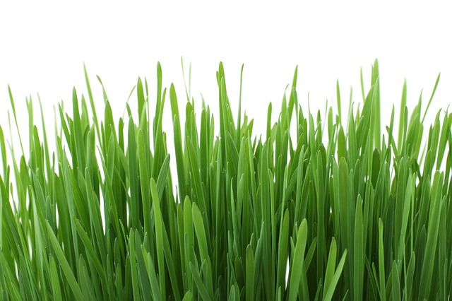 Jhc-landscaping-spring-lawn-care