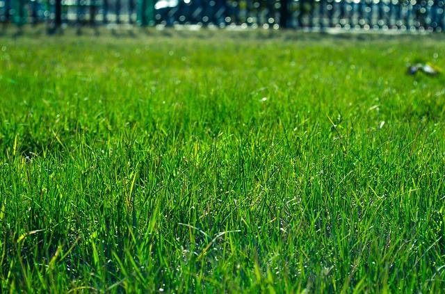 Fertilized green grass