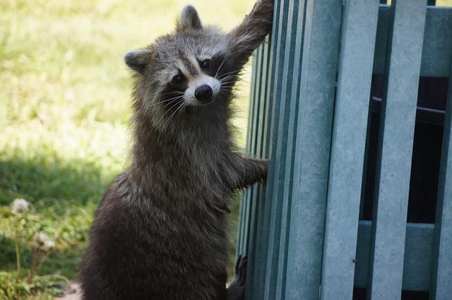 Raccoon Protection Net
