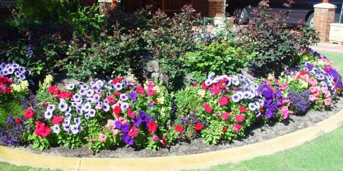 9 Landscaping Tips and Tricks for a Perfect Landscape