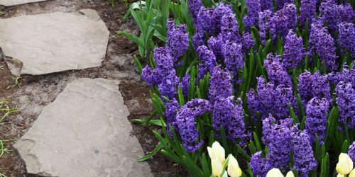 Flower Bed Edging in 4 Easy Steps