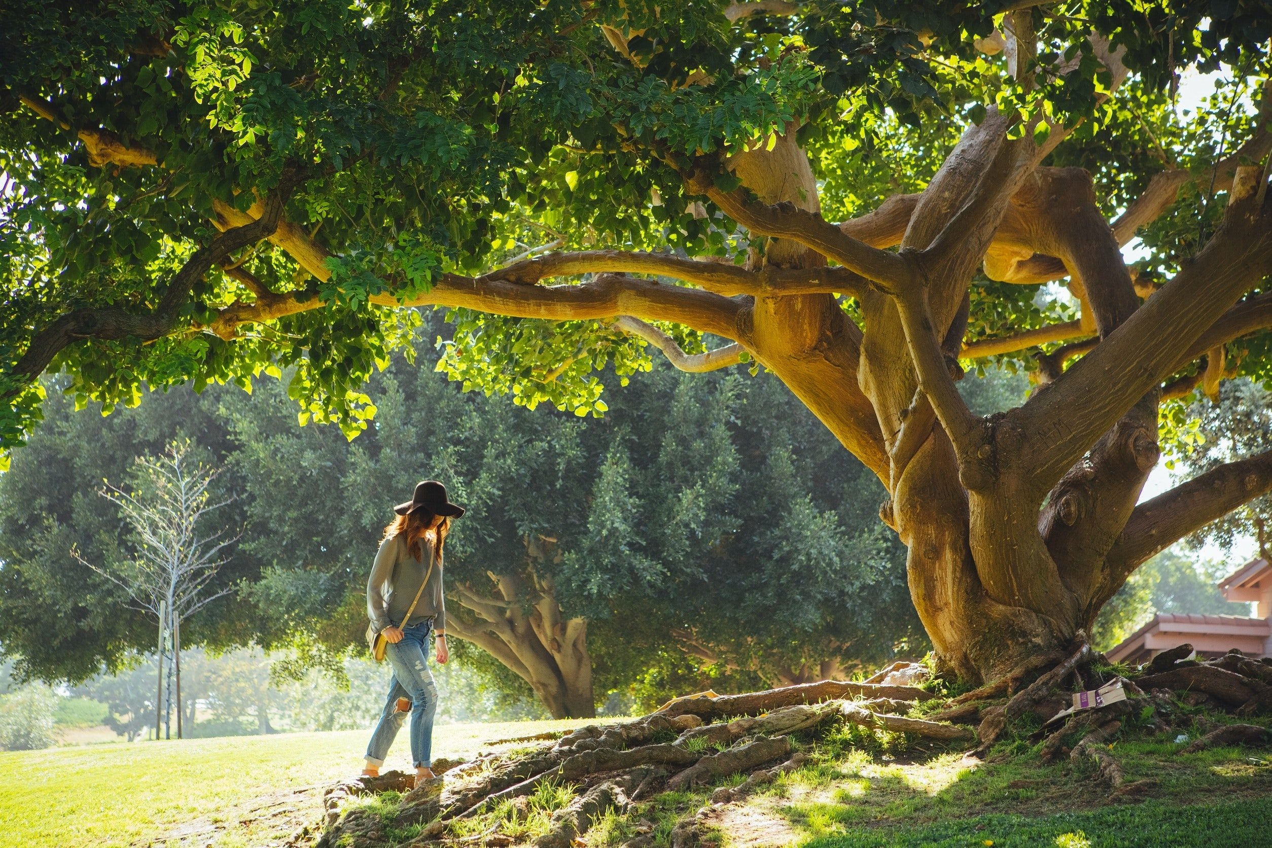 How to Uproot a Tree without Killing It | J H C  Landscaping Inc