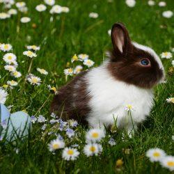 bunny in garden