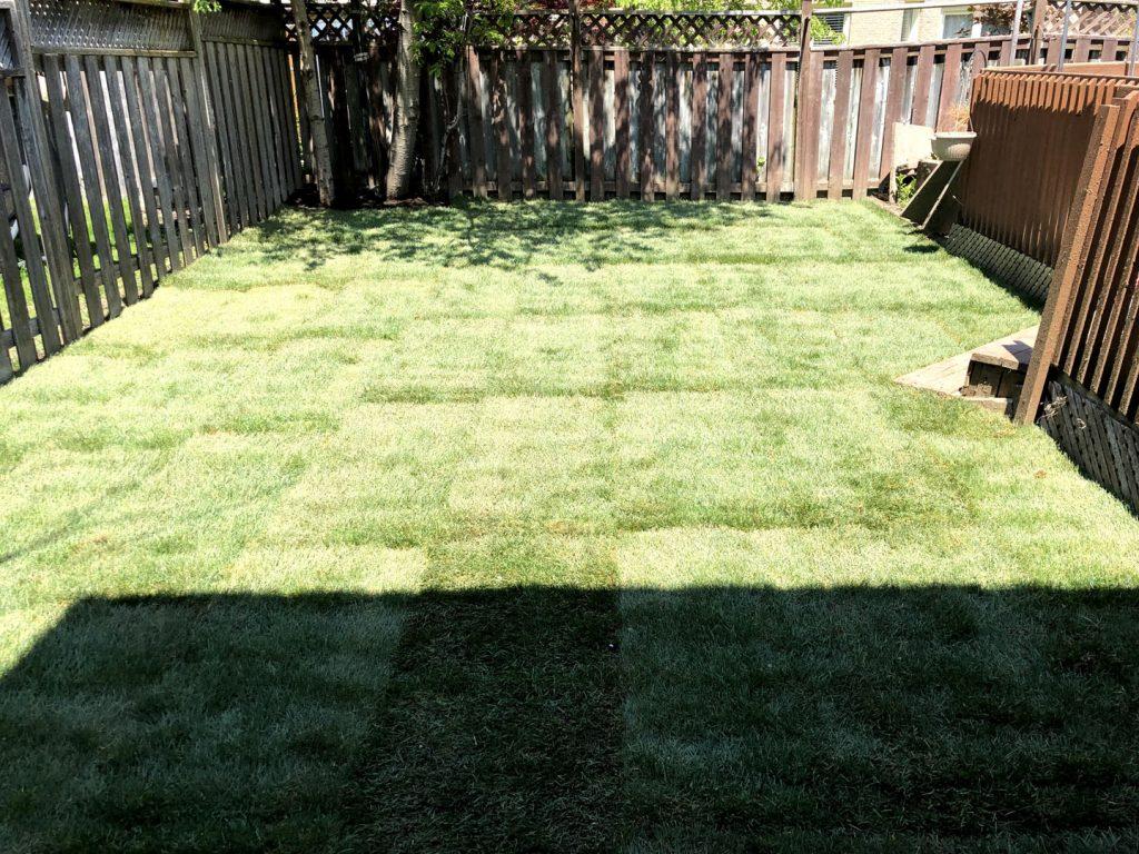 sodding done project - gta lawn care