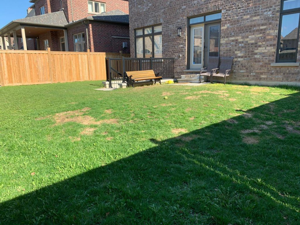backyard lawn replacement and stone interlocking before -  gta lawn care