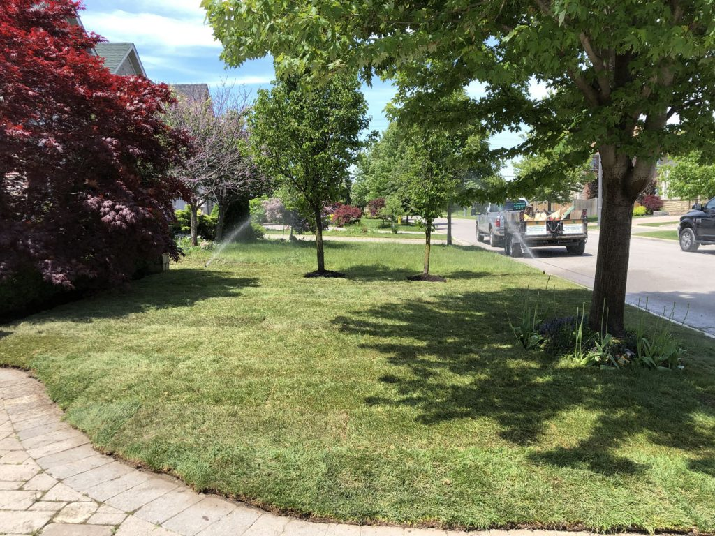 front yard sodding replacement after - landscaping companies gta