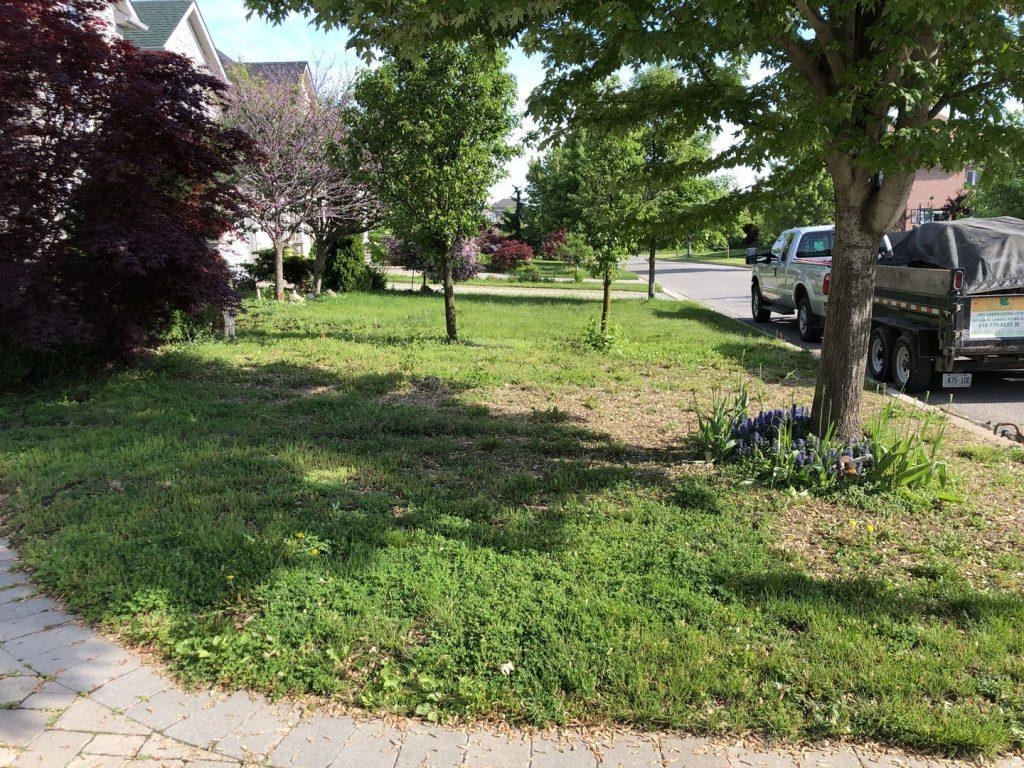 front yard sodding replacement before - interlocking toronto