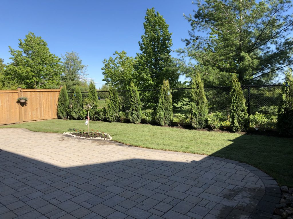 finished project of backyard tree plant and sodding lawn - landscaping companies gta
