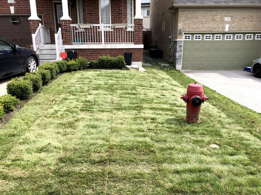 front yard grass sodding after - lawn care toronto ontario