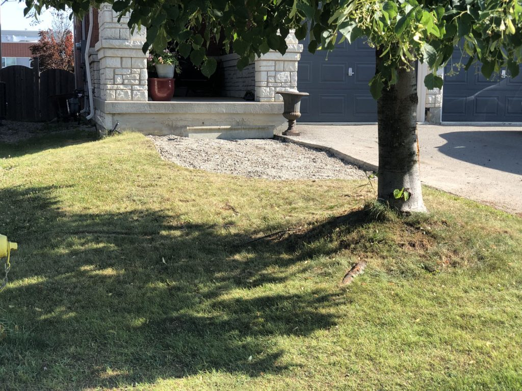 front yard after sodding and before stone interlocking - asphalt driveway toronto