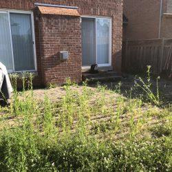 interlocking maintenance and sod installation before - interlock driveway cost toronto