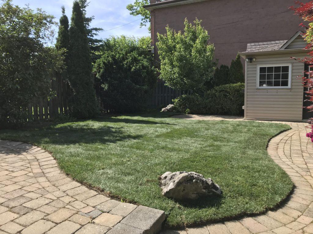 backyard round lawn sodding after - lawn care richmond hill