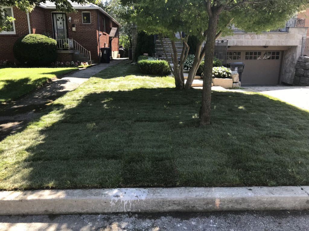 lawn sodding in front yard after - lawn service toronto