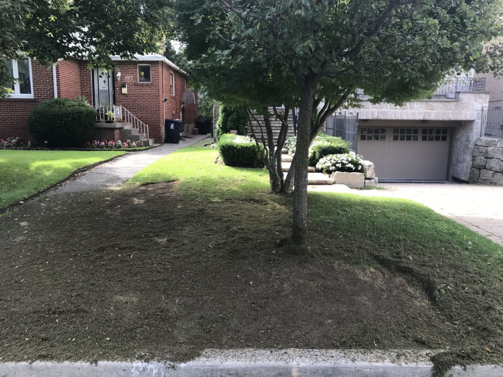 lawn sodding in front yard before - lawn mowing toronto