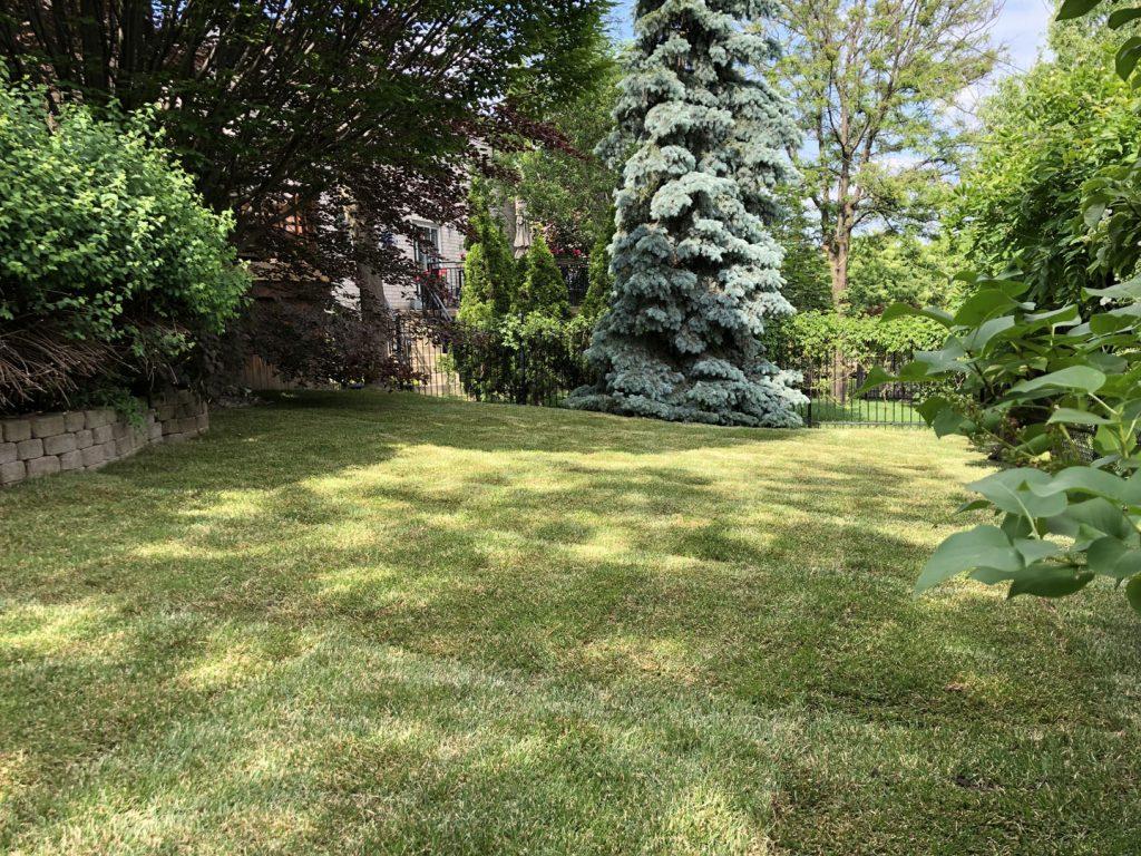 huge back yard sodding and landscaping after -sod for sale toronto