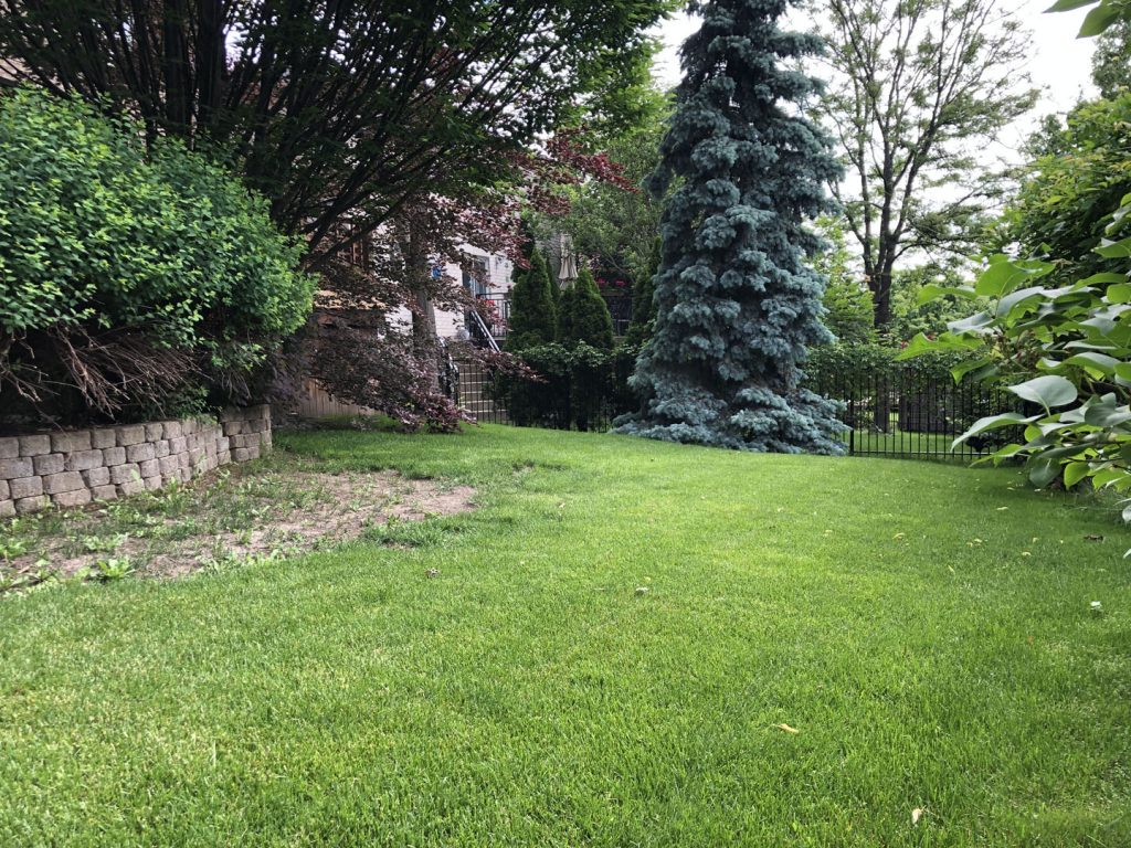 huge back yard sodding and landscaping before - snow removal vaughan ontario