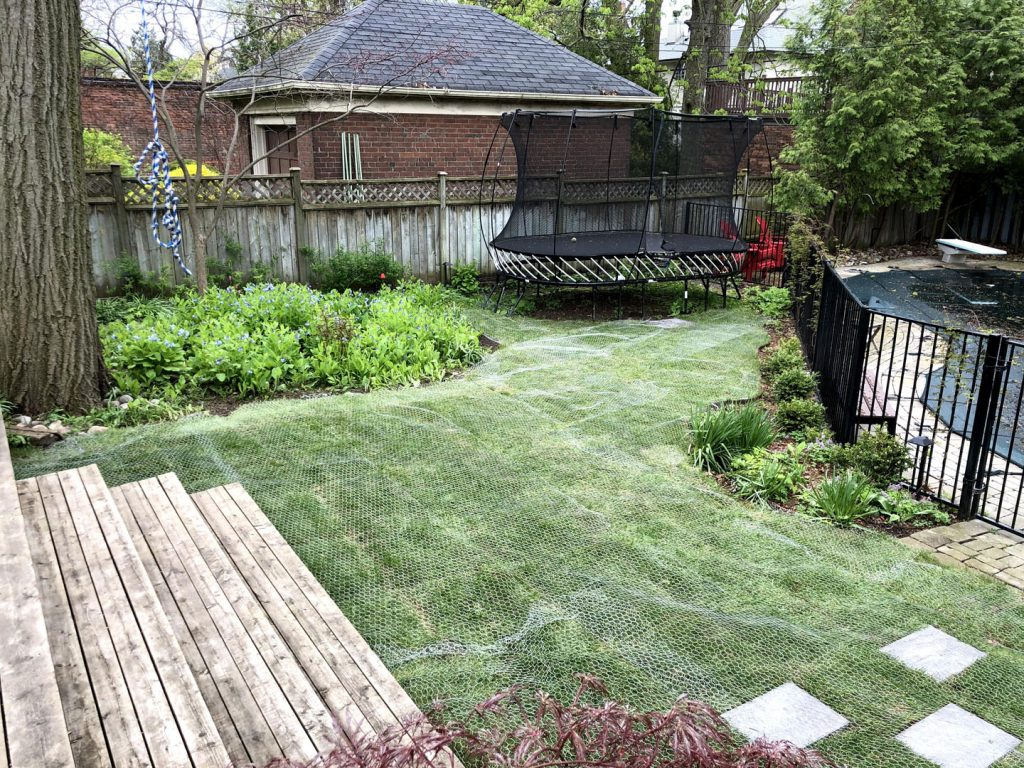 new sod installed with protection net - driveway paving toronto