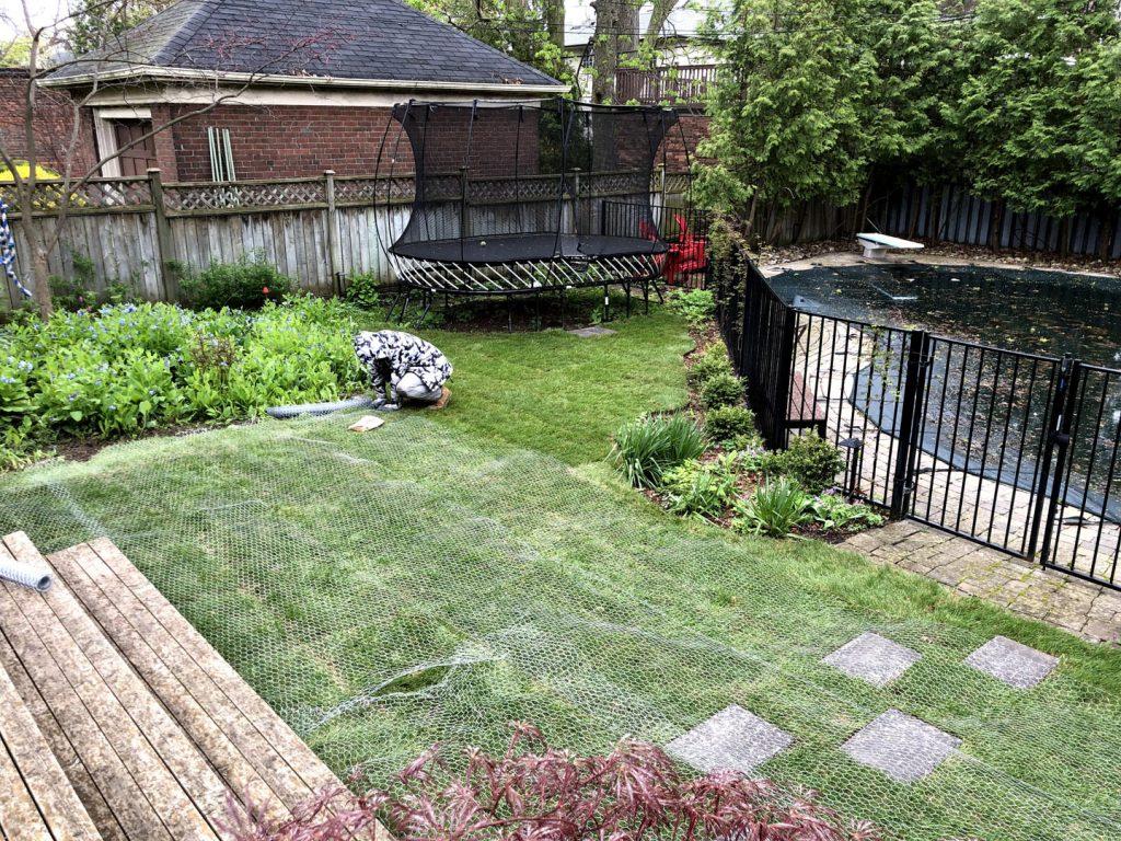 backyard landscaping with new sod - driveway repair toronto