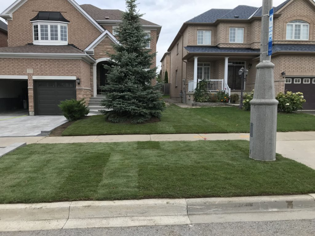 street lawn sodding finished -  snow removal thornhill