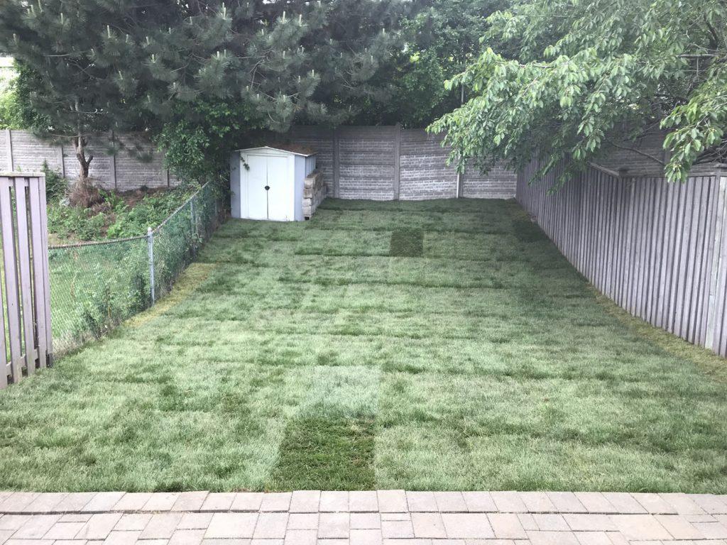 small backyard sodding after - interlocking toronto