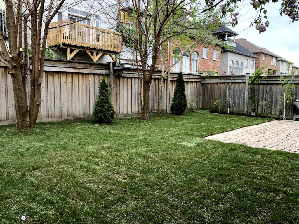 lawn care and replacement after -  how to maintain new sod