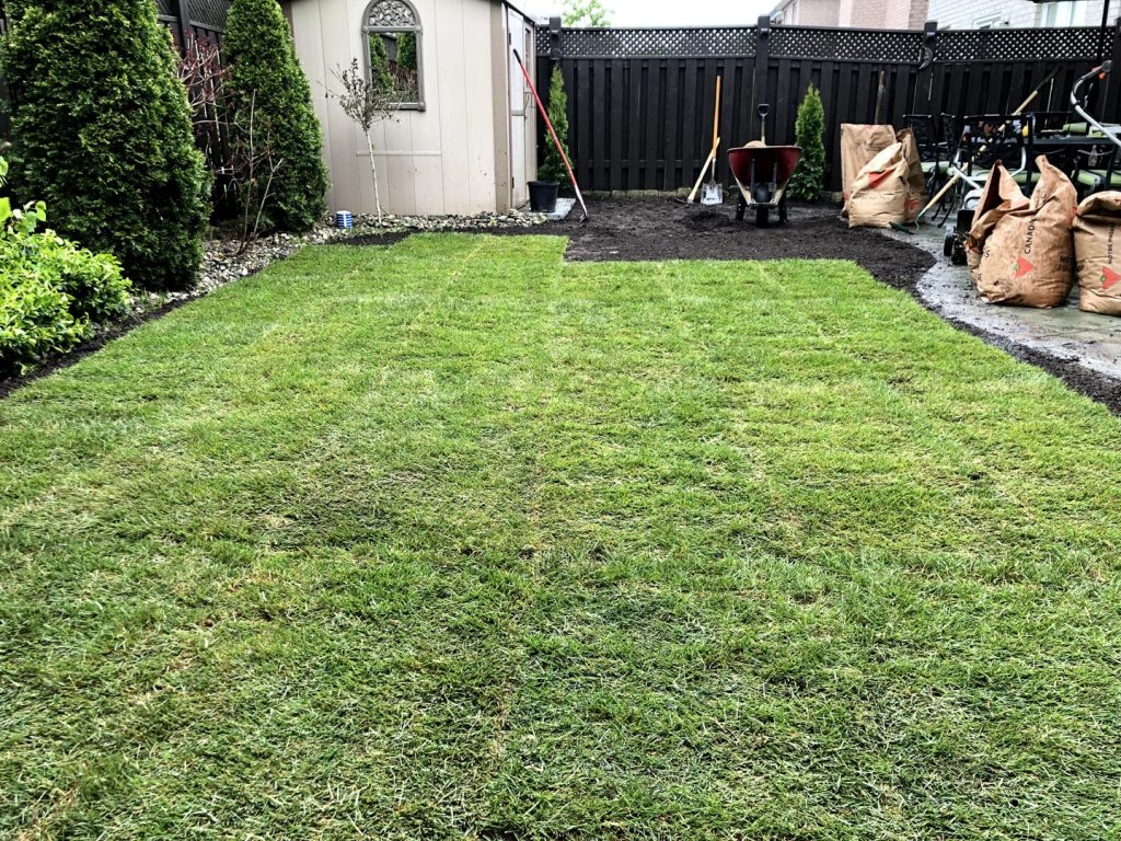 sodding lawn replacement in back yard in progress - landscaping companies gta