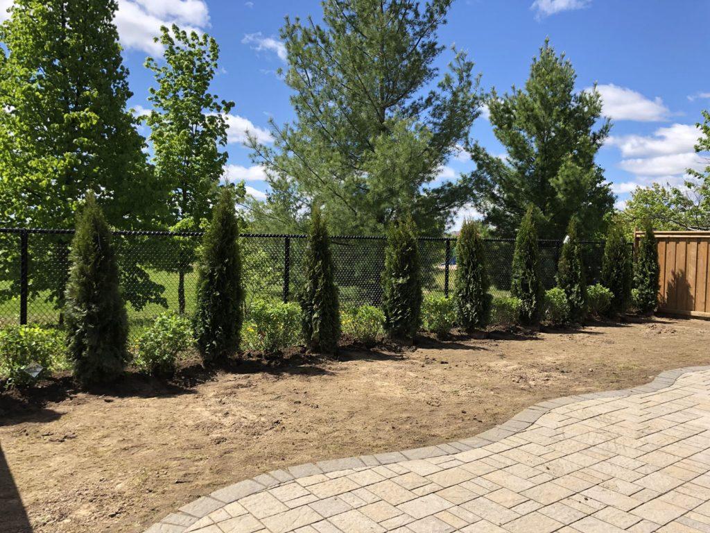 backyard tree plant and sodding lawn, in progress different angle  -landscape maintenance toronto