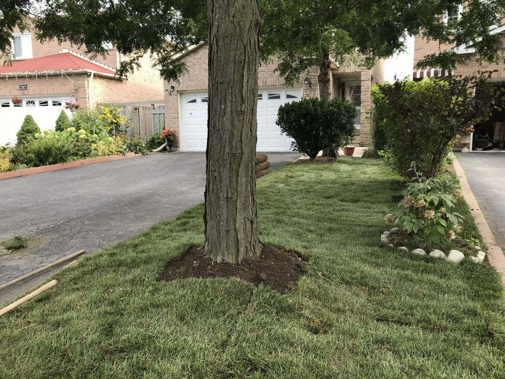 lawn care markham