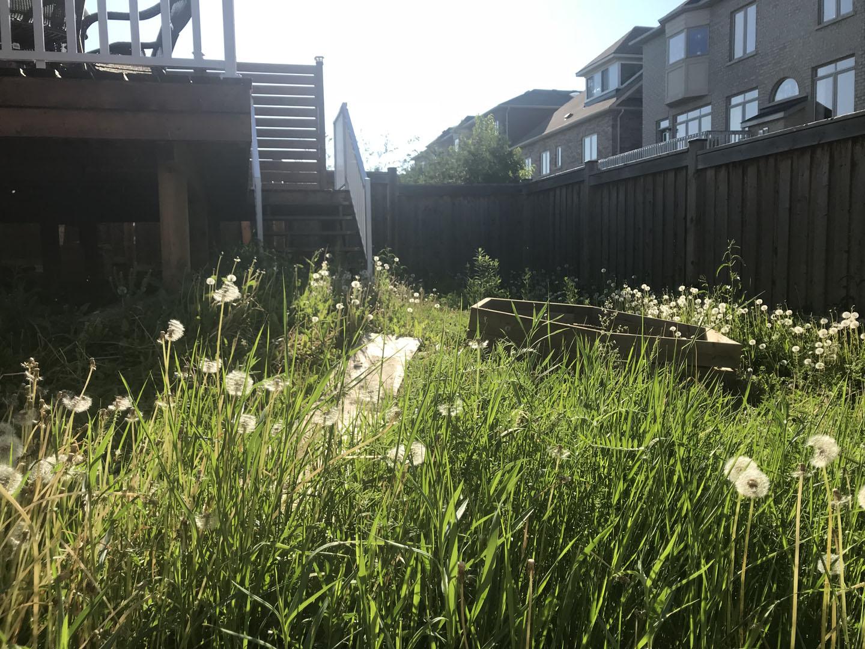 sod installation cost toronto
