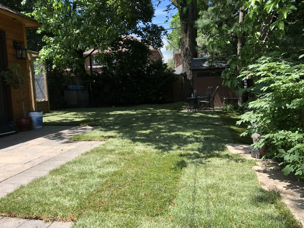 back yard sodding near sidewalk after - where to buy sod in toronto