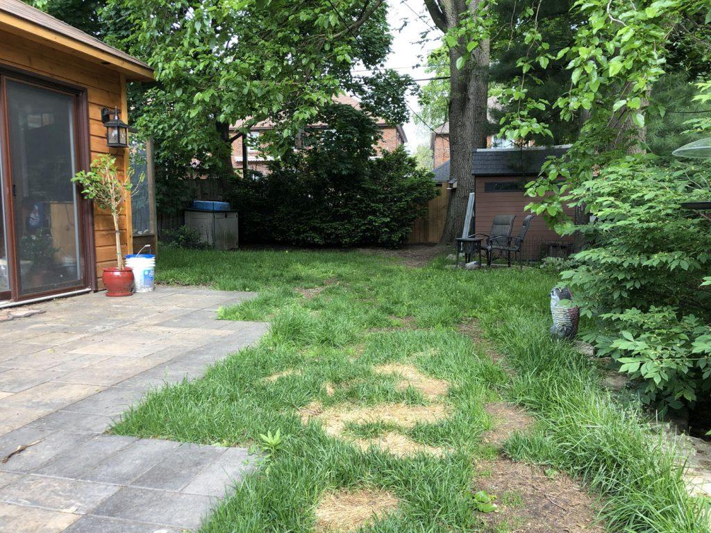 back yard sodding near sidewalk before - toronto sod