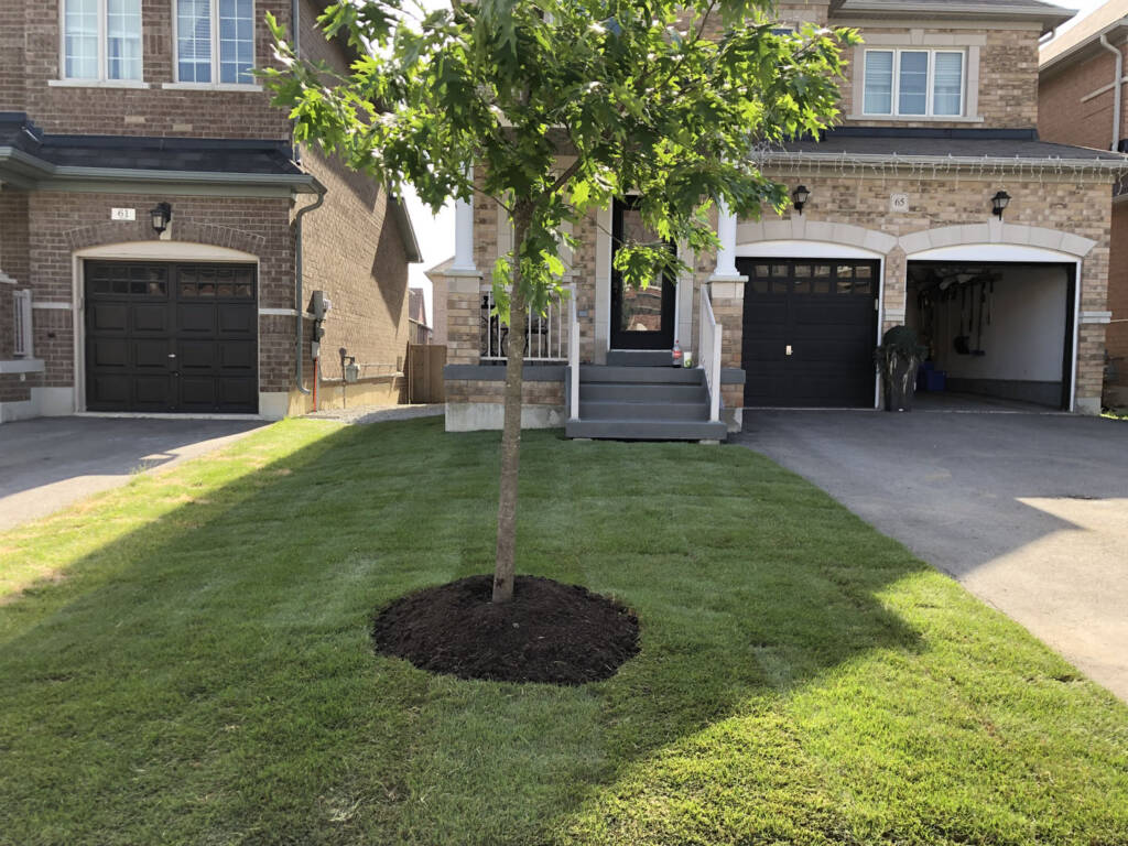 Luxury Front Yard with Tree Plant and New Sodding Brampton