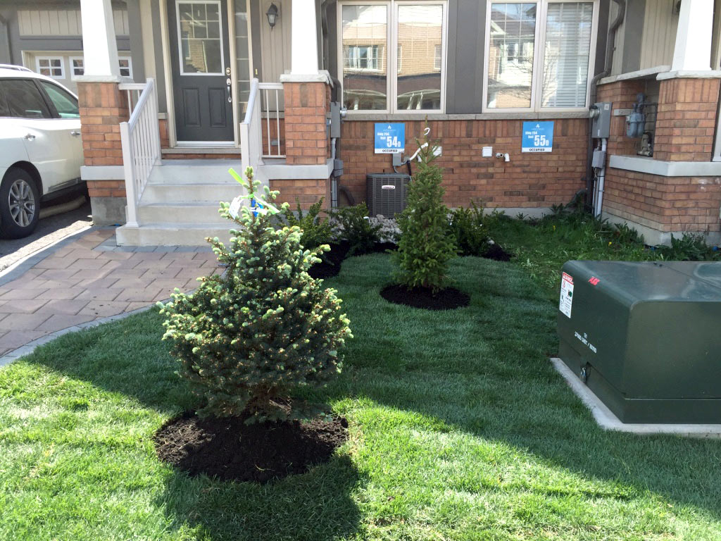 Sodding and Tree Planting by JHC Landscaping Mississauga