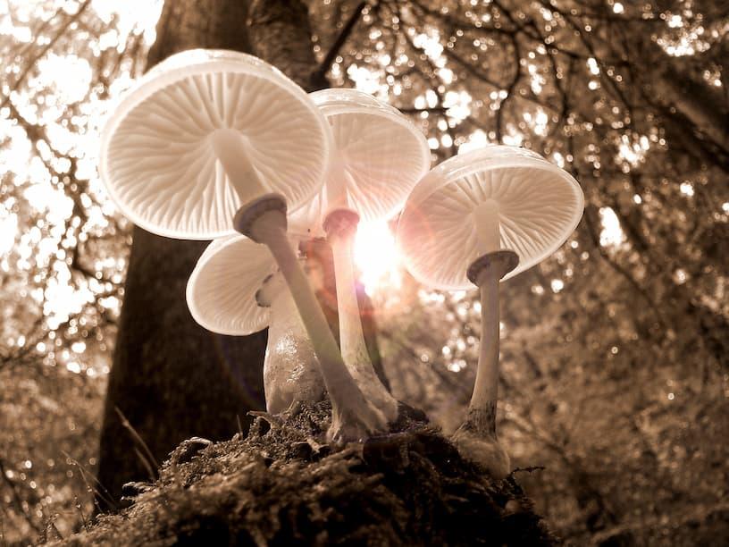 fungi growing in the yard